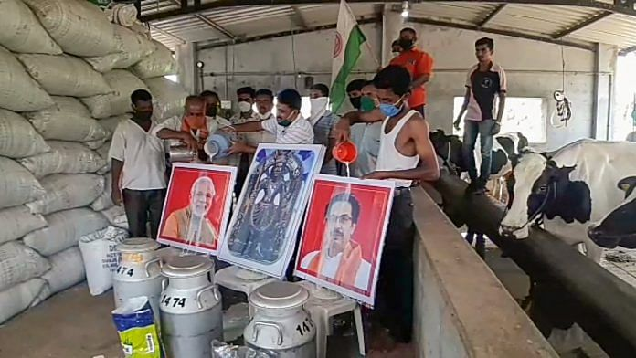 Dairy farmers and Swabhimani Shetkari Sanghtana workers pour milk on portraits of PM Narendra Modi and Maharashtra CM Uddhav Thackeray as a sign of protest | Photo: PTI