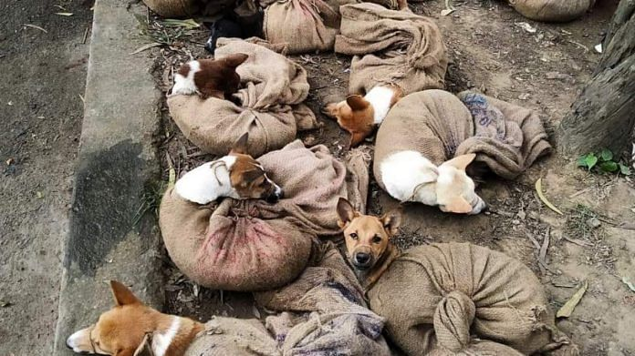 The viral picture of dogs tied in gunny bags shared on Twitter