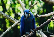 Blue Macaw | Pexels