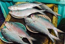 Representational image for hilsa fish | Photo: Commons