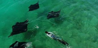 Malaika Vaz swimming with manta rays | By special arrangement