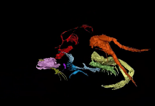 Screengrab of a video reconstruction of Myanmarcypris hui | Proceedings of the Royal Society B