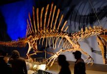 A skeleton of a Spinosaurus on display at Japan Expo | WikiCommons via Flickr