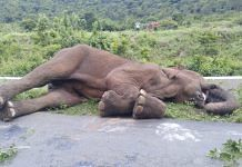 The elephant was found dead Wednesday near a wooden bridge at Sholayur along the Kerala-Tamil Nadu border   By special arrangement