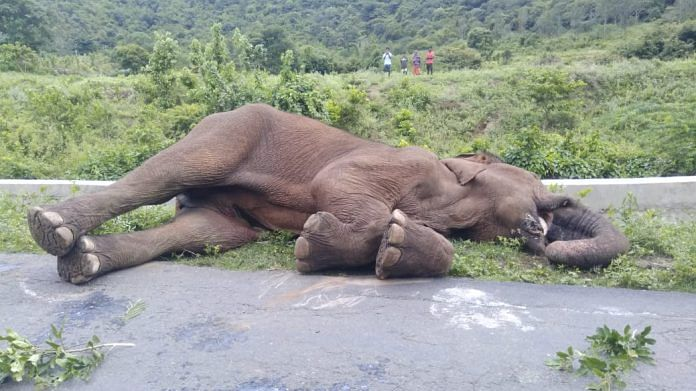 The elephant was found dead Wednesday near a wooden bridge at Sholayur along the Kerala-Tamil Nadu border | By special arrangement