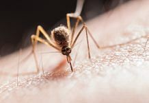 Mosquito biting on the skin (representational image) | Pexels