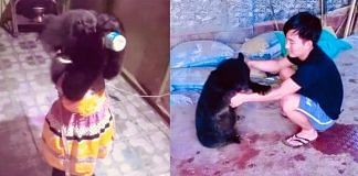 Luba the bear with her 'brother' Terde Yomcha   Mama Natung   Facebook