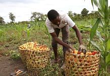 A farming project in Central African Republic