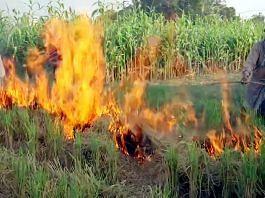 Farmers in Punjab's Tarn Taran burn stubble in their fields | Photo: ANI
