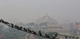A hazy view of Delhi's Akshardham temple, seen behind a group of pigeons perched on an electricity wire | Photo: Suraj Singh Bisht | ThePrint