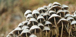 Mushrooms | Pexels