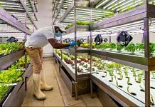 A migrant worker tends to plants growing under LED lighting inside an indoor hydroponic farm operated by Green Container Advanced Farming LLC (GCAF) in a Carrefour SA grocery store in Dubai, United Arab Emirates, on Monday, Nov. 9, 2020. | Bloomberg