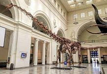 Representational image of a Titanosaur skeleton cast on display at the Field Museum of Natural History, Chicago via Wikimedia