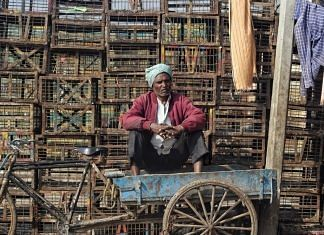 Representational image. | A poultry worker sits idle with empty cages at the Ghazipur market after reports of bird flu, in New Delhi. | Photo: ANI