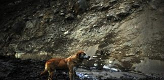 A dog looking for her lost puppies in Uttarakhand's Chamoli after the flash floods. | Photo: Suraj Singh Bisht/ThePrint