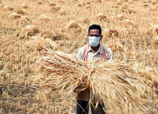 File image of a farmer in a wheat field in Madhya Pradesh during the lockdown   Photo: ANI