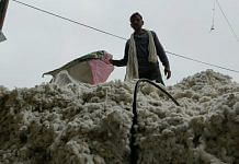 Cotton at the mandi in Sirsa district | By special arrangement