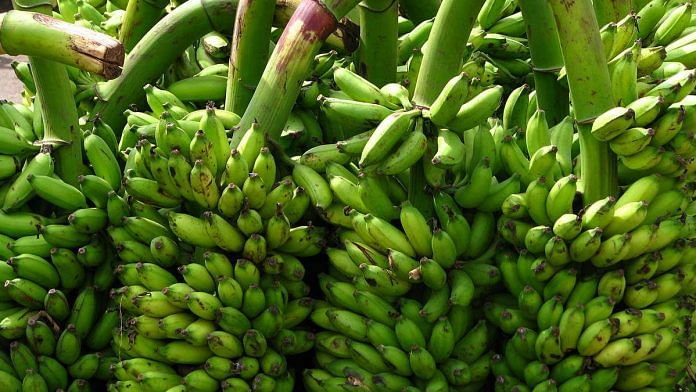 Representational image for bananas produced in India   Photo: Commons