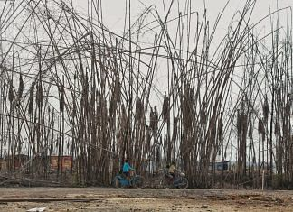The indigenous bamboo trees that grew on the side of the road were burnt in the fire | Photo: Manisha Mondal | ThePrint