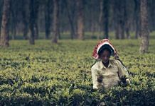 Assam's tea workers | Frank Busch/Flickr
