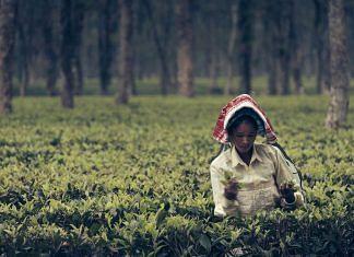 Assam's tea workers | Frank Busch/Flickr