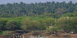 Avian biodiversity of Noyyal system lakes | Sanket Bhale