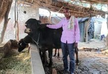 Chandrapal Singh with his buffaloes at his home in a Shamli village | By special arrangement