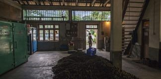 File photo | A pile of organic ginger lies on a warehouse floor in Rangpo, east Sikkim |Prashanth Vishwanathan/Bloomberg