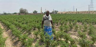 R Rajendran, a farmer who recently started cultivating chilli, at his farm in Neyveli village | Revathi Krishnan | ThePrint