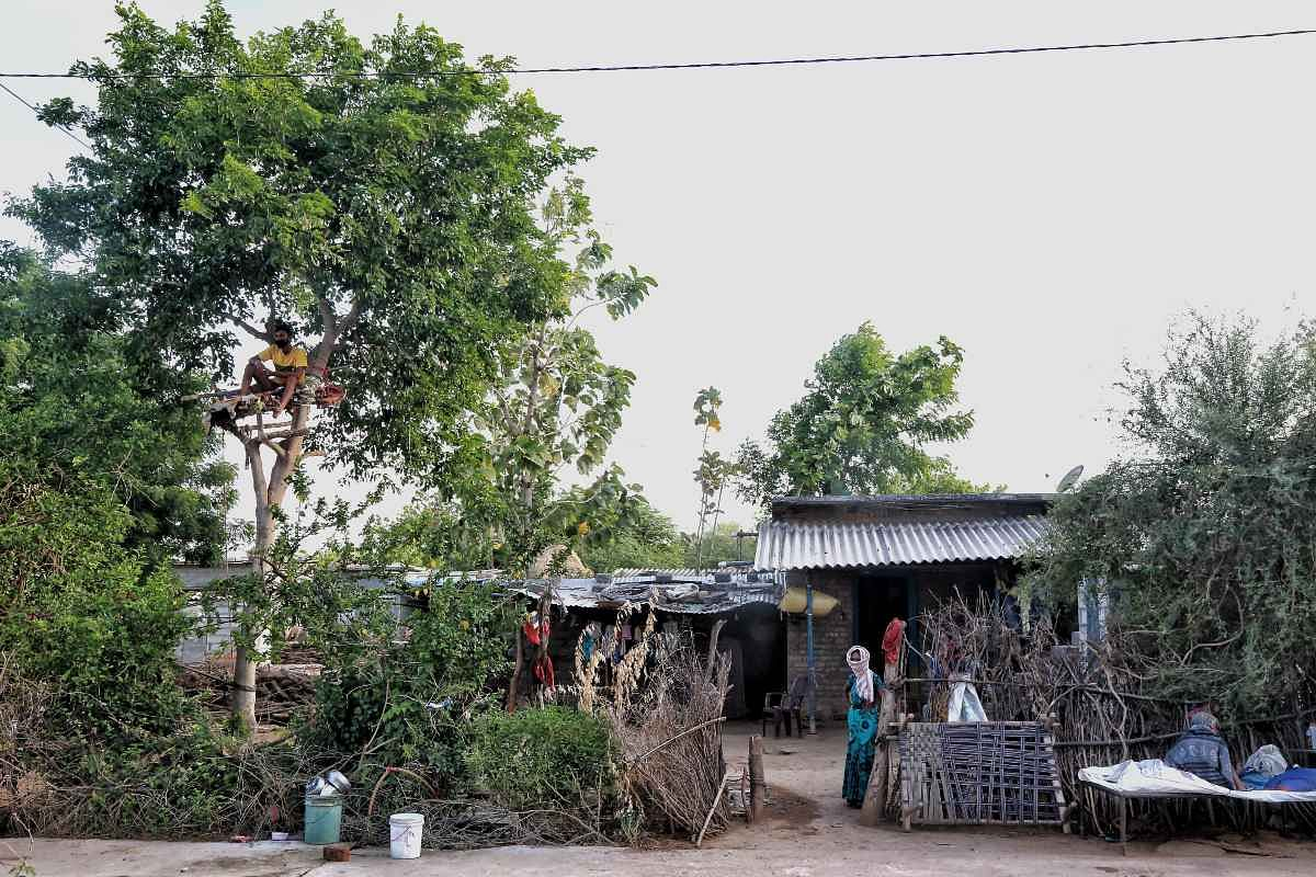 Shiva has been isolating on the tree for the past 11 days since his home is a single-room unit that houses four others, in Nalagonda district, Telangana | Manisha Mondal | ThePrint