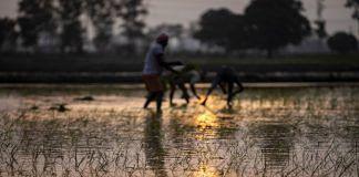 Farmers at a paddy field   Representational image  Photographer: Prashanth Vishwanathan   Bloomberg
