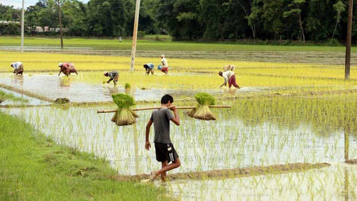 A farmer farming paddy field at Jokai, under Dibrugarh district in Assam on 17 June 2020 | ANI
