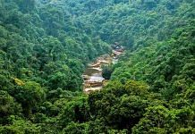 Forests of Cherrapunji, Meghalaya | Commons