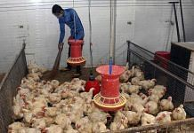 A worker cleans a poultry farm amid bird flu alerts | Representational Image| ANI