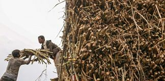 Workers load a bundle of sugarcane onto a truck while harvesting the crop in the Jalana district of Maharashtra, India (File photo)   Bloomberg