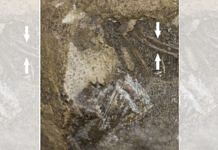 Photograph of the fossilised egg showing the exposed embryonic bones of the turtle | The Royal Society