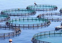 File photo of fish farming | Commons