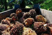Harvested oil palm fruits loaded into a trailer at a plantation in Kapar, Selangor, Malaysia | Photo: Joshua Paul | Bloomberg Photo