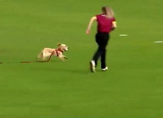 Screengrab of Dazzle the dog invading the pitch during a women's domestic T20 match in Ireland   Twitter   @IrishWomensCric