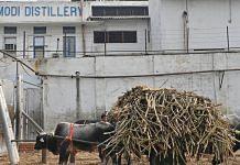 Sugarcane farmers wait with their bullock carts to unload their crop outside the Modi Sugar Mills in Modinagar, Uttar Pradesh | Photographer: Anindito Mukherjee | Bloomberg