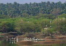 Avian biodiversity of Noyyal system lakes (Representational image) | Sanket Bhale