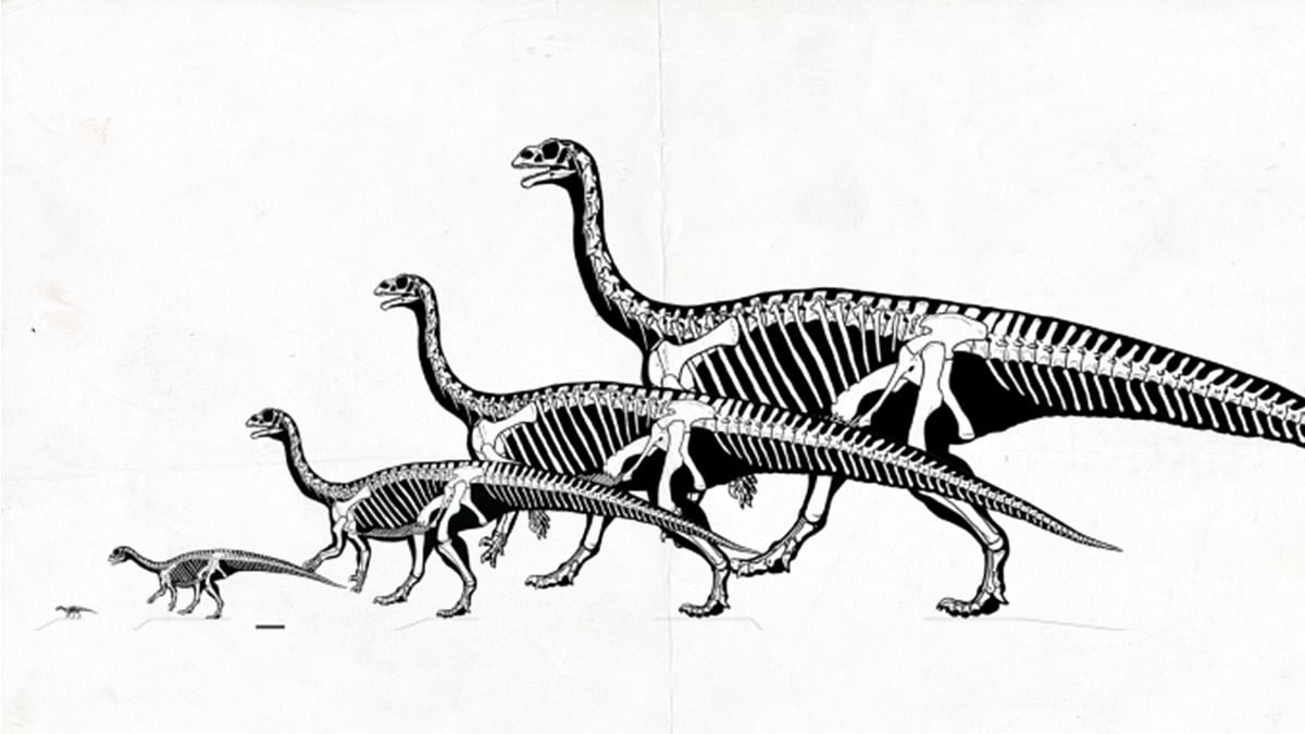 Dinosaurs lived in herds, socialised nearly 200 million yrs ago, newly discovered fossils show - ThePrint