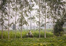 A farmer rides past fields of corn in Karnal, Haryana | Photo: Prashanth Vishwanathan | Bloomberg File Photo